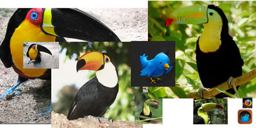 Photos of various breeds of toucans and some application icons